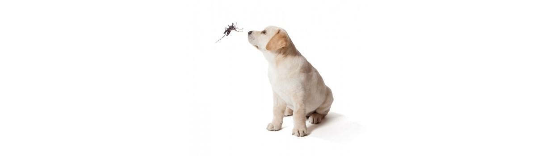 Antiparasitos para perros