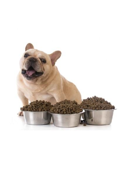 Piensos perros