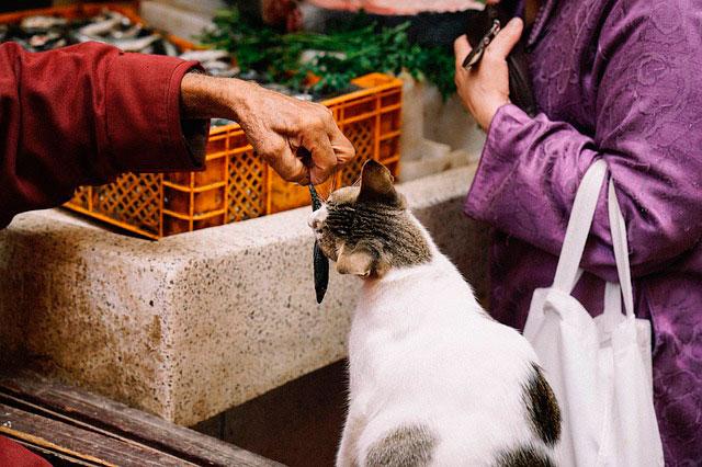 Que alimentos están prohibidos para gatos
