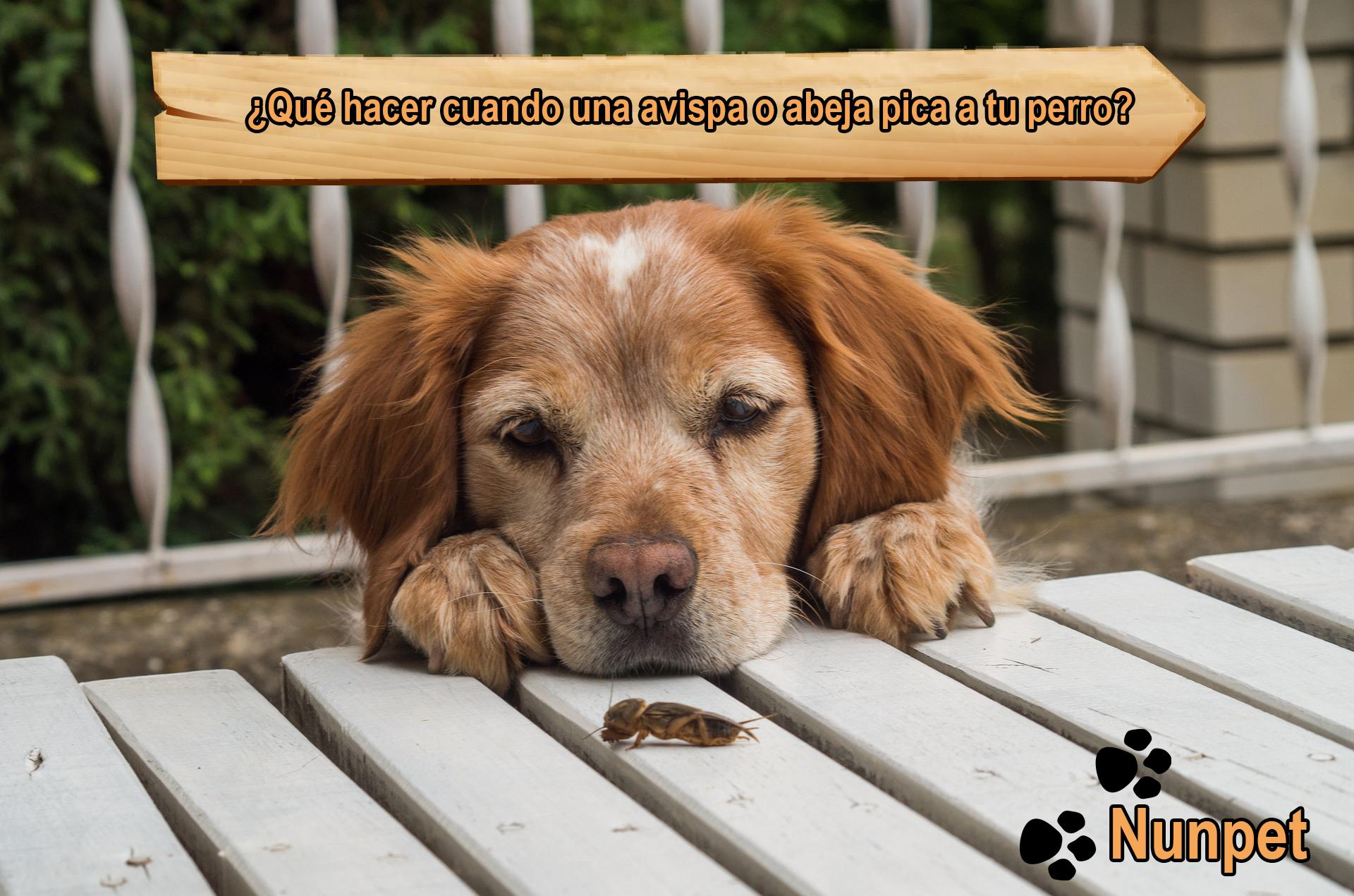 ¿Qué hacer cuando una avispa o abeja pica a tu perro?