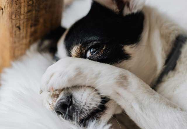 Halitosis canina y como combatirla