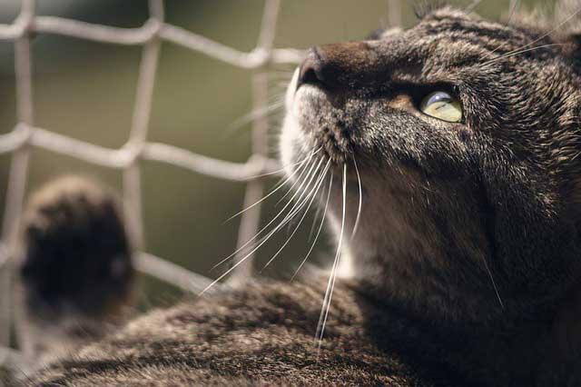 Problemas urinarios en gatos síntomas y tratamientos