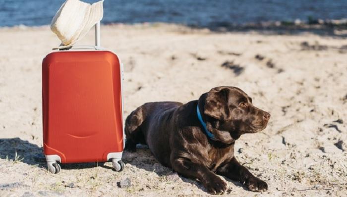 Perros viajeros