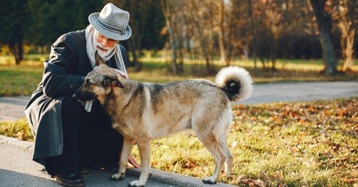 Perros senior y sus síntomas