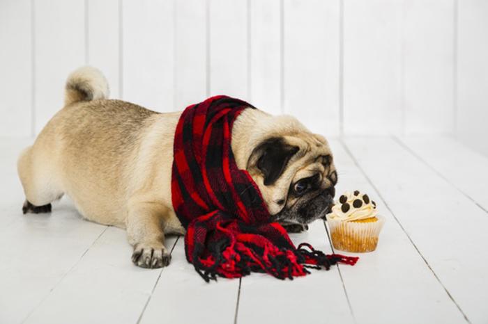 ¿Qué debe comer un perro?