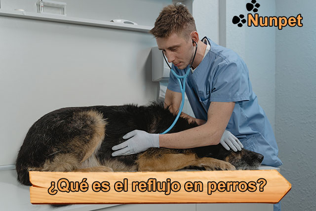 ¿Qué es el reflujo gastroesofágico en perros?