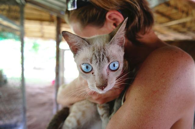 El sida felino o virus de inmunodeficiencia felina