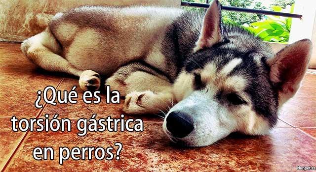 ¿Qué es la torsión gástrica en perros?